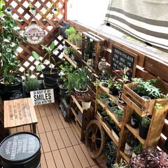 手作り棚/ナンバープレート/ガーデンホイール/スチールプレート/ペール缶リメイク/ベランダ/... ニトリで買ったスチールプレートとガーデン…