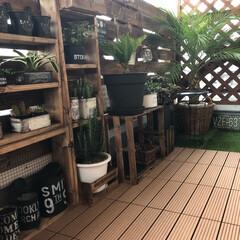 棚DIY/フェニックス/人工木ウッドパネル/ラティスフェンス/1×4材/ベランダガーデン/... ベランダ大改造!