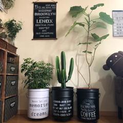タペストリー/観葉植物/ペール缶/ステンシル/リビング/グリーン/... ペール缶を塗装してステンシル♬ タペスト…