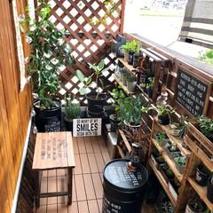 ペール缶/1×4材/ウッドラティス/ベランダ/ベランダ大改造/ベランダガーデン/... テーブルとして作りましたが、ベンチ椅子と…