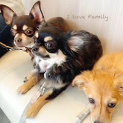 犬と暮らす/犬のいる暮らし/親バカ/チワックス/チワワ/愛犬/... こんにちは ☀︎  少し前の病院待合室で…