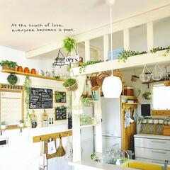キッチン雑貨/グリーン/DIY/ディアウォール/雑貨/100均/... * キッチン *