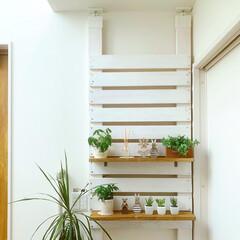 ラブリコで棚/ラブリコDIY/ラブリコ/DIY女子/DIY/棚/... 玄関にラブリコを使って 棚を設けました♩…(1枚目)