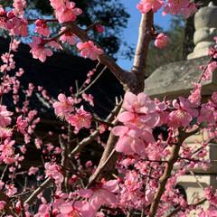 春/LIMIAペット同好会/わんこ同好会/風景 散歩中🐾見つけた春 カラフルな季節になっ…