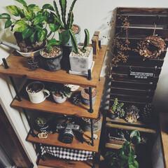 ルーバー/グリーン/DIY/雑貨/インテリア 左のグリーン棚は何年も前に自分でDIYし…