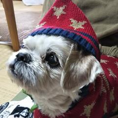 パーカーコーデ/冬/ペット 初めての洋服… ね~似合う?どう?