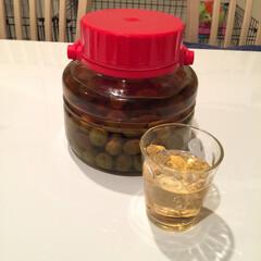 自家製梅酒 梅酒ロック🍸 明日は炭酸で割ろう〜🎶