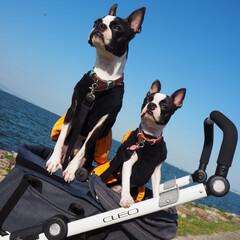 なぎさテラス/琵琶湖/ペット/犬/おでかけ うちの子ベストショットに応募します😊  …