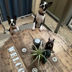 ステンシル/ケーブルドラムリメイク/DIY こんばんは⭐️ ケーブルドラムをテーブル…
