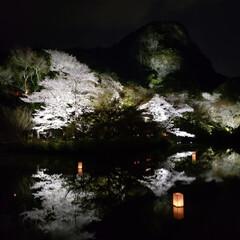風景 夜桜♡
