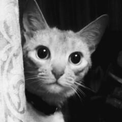 あけおめ/ペット/猫/にゃんこ同好会