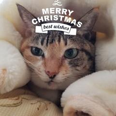 ペット/猫/にゃんこ同好会/クリスマス