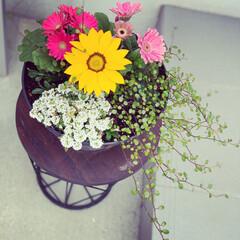 おはな/住まい ひさびさ投稿♡   今日は花と触れ合いま…