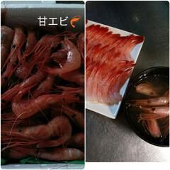 北海道浜益エビ祭り/北海道/甘エビ/ランチ/バラ園/おでかけ 今日は朝からどんよりしたお天気でした💦 …