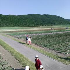 チューリップ🌷/北海道上湧別/おでかけ かみゆうべつ チューリップ公園❗  ここ…(6枚目)