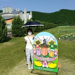 チューリップ🌷/北海道上湧別/おでかけ かみゆうべつ チューリップ公園❗  ここ…(7枚目)
