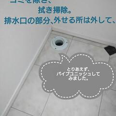 掃除/洗濯機掃除/洗濯機周り/洗面所 年末年始、大掃除せず終わり、、、😅この3…(3枚目)