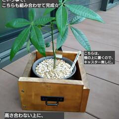 ウッドデッキ/ダイソー/セリア/DIY/多肉植物/観葉植物 3ヶ月前にダイソーで買って大きくなったパ…(9枚目)