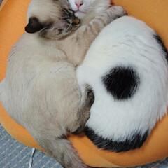 里親/5月11日生まれ/猫/ペット 2匹とも同じ誕生日【5月11日生まれ】 …
