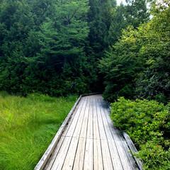 木道/ハイキング/湯ノ湖/夏の思い出フォトコンテスト/避暑地/奥日光/... 今年の夏は暑くて参った。 そうだ!避暑地…