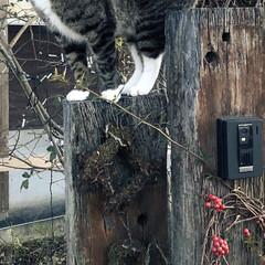 甘えん坊さん/高い所好き/枕木門柱/ペット/猫/玄関 我が家の猫。 ゆず3歳。 ずっと甘えん坊…
