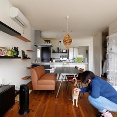 ds/D´S STYLE/自分スタイル/リビングダイニング/猫のいる生活/キャットウォーク/... 家をおしゃれに住みこなそう。 そう、着こ…