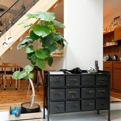 土間/アンティーク家具/観葉植物/雑貨/階段/リビング/... ~土間スペースも自由自在に . 家をおし…
