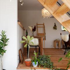 自然素材/無垢材/無垢杉の床/漆喰の壁/白い壁/W断熱/... . ~リビング階段の下に植物を置いて  …