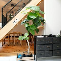 自然素材/無垢材/無垢杉の床/漆喰の壁/白い壁/W断熱の家/... . ~アンティークの収納棚が  土間空間…