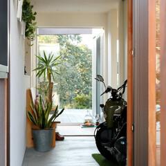 ds/D´S STYLE/土間のある暮らし/自然素材/無垢/グリーン/... 家をおしゃれに住みこなそう。 そう、着こ…