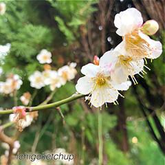 花の写真/はる/風景 ぶらっ〜と出かけてきました。 すぐに桜の…