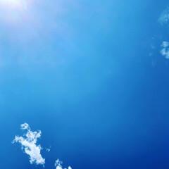 カマキリの赤ちゃん/眩しい太陽/梅雨明け 梅雨明けしましたね☀ 太陽が眩しいです …