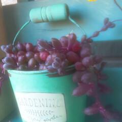 多肉植物のある暮らし 花が咲いた ( ✿˘︶˘✿ ).。.:*…