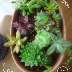 多肉植物寄せ植え 今日☀  暑くなりそうですね  風~~~…