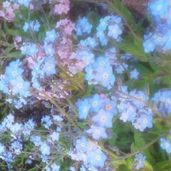 花のある暮らし 庭の花 色々 🌼*・🌼*・      (6枚目)
