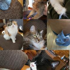 猫カフェ/猫 今日 ニャンコの日🐱 私は犬派ですが(⌒…