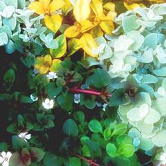 花のある暮らし 庭の花 色々 🌼*・🌼*・      (4枚目)