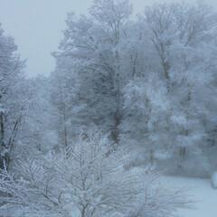 雪景色 天気予報大当たり!  降った(TT)  …