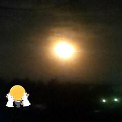 満月/綺麗な月/マックフルーリー/月見/十五夜/おうち時間/... 本日 十五夜 🌾🍡🌕🐰 お月様が とって…(1枚目)