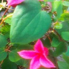 花のある暮らし 庭の花 色々 🌼*・🌼*・      (2枚目)