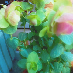 花のある暮らし 庭の花 色々 🌼*・🌼*・      (3枚目)