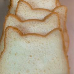 パン祭り/ねこパン たまたま行ったら パン祭り やってました…(2枚目)