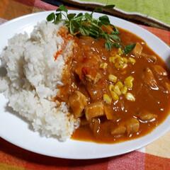 マイブーム/ご飯/カレー/キッチン