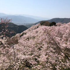 桜🌸/平成最後の一枚/春のフォト投稿キャンペーン/LIMIAおでかけ部/フォロー大歓迎/おでかけワンショット 土曜日に天気も良かったので  地元で有名…