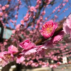 梅の花/夕日