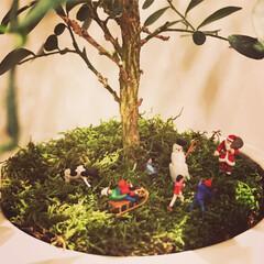 観葉植物 ゲッキツにクリスマスデコ🎄 プライザーは…