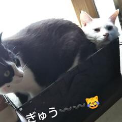 かごの猫/お昼寝/はちわれ猫/白猫/暮らし お兄ちゃんと一緒にいたかったのか 無理や…