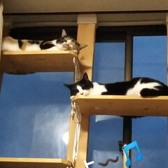 キャットタワー/はちわれ猫/三毛猫/DIY/暮らし お部屋、ストーブがついてるので 暖かいに…