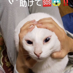 捕まりました/白猫/暮らし 誰か〰️‼️助けて〰️‼️ ストーブの前…