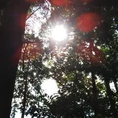 お参り/祇園神社/五ヶ瀬/宮崎 今日、主人が小学生の頃に時々行った神社へ…
